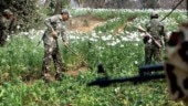 J&K: Massive crackdown on illegal poppy cultivation in Pulwama