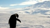Antarctica thrives on penguin and seal poop: Study