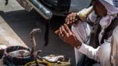 Snake charmers may make your premature babies smarter, says study