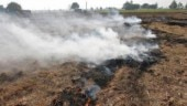 Stubble burning: Farmers take advantage of Lok Sabha elections to get rid of farm residue