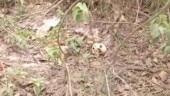 Skeletons found near Bihar hospital: Minister blames media, RJD links remains to Muzzafurpur shelter case