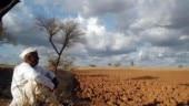 Maharashtra: Drought-affected Marathwada, Vidharbha to wait longer for rains, says IMD