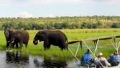 Botswana legalises elephant hunting and Zimbabwe gets ready to sell them. Internet is divided