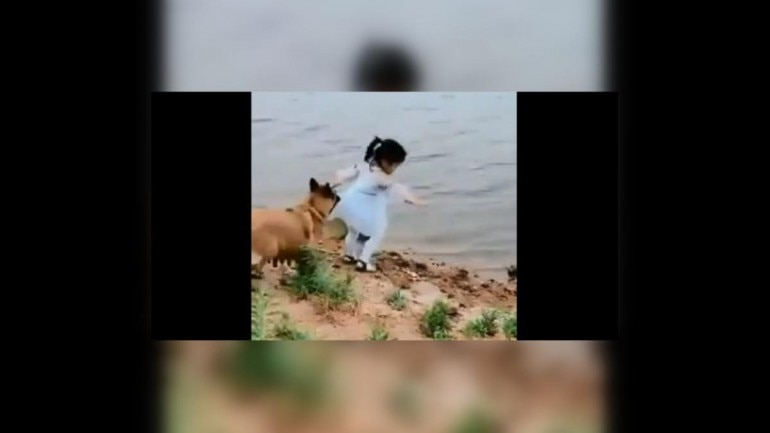 Viral video of dog saving girl from falling into deep water