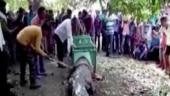 Crocodile enters Gujarat temple, villagers call it auspicious, offer prayers, delay rescue operations