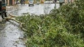 As rain and strong winds hit Mumbai, 3 die in tree collapse incidents since Thursday
