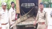 Madhya Pradesh: Crocodile enters residential area due to heavy rain, rescued