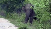 Chandigarh: Woman trampled to death by elephant