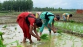 Farmers rejoice as India receives above normal monsoon rains