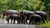 Elephant attacks killed 369 people in Odisha since 2015