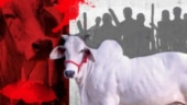Uttar Pradesh: Madrasa boundary wall pulled down following rumours of beef recovery in area