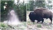 Bison hits girl and sends her flying in air at Yellowstone National Park. Disturbing video goes viral