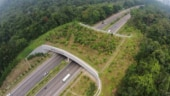 Fact Check: No, the viral photo of eco bridge is not from the Netherlands