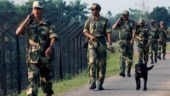 West Bengal: BSF nabs 4 Bangladesh nationals smuggling cattle along border
