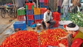 Why tomatoes cost a bomb