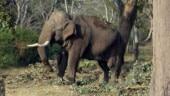 Ranchi: Elephants damage property; kill woman, year-old daughter