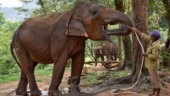 Three elephants die of electrocution in West Bengal