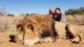 Couple kill lion, kiss next to corpse in South Africa, pic goes viral. Internet tears into them