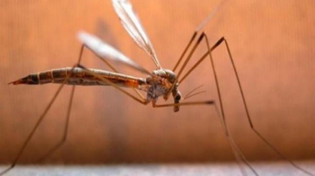 Over 60 malaria cases in Delhi, 27 of dengue