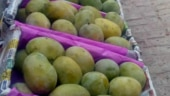 In Bihar, mangoes get mired in political controversy