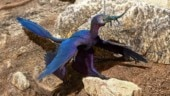 New lizard species found in microraptor stomach named after Lord Indra