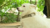 Kerala owner dumps 3-year-old pet dog because it had an illicit relationship. You read that right