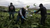 US envoy offers farm visas to boost asylum deal with Guatemala
