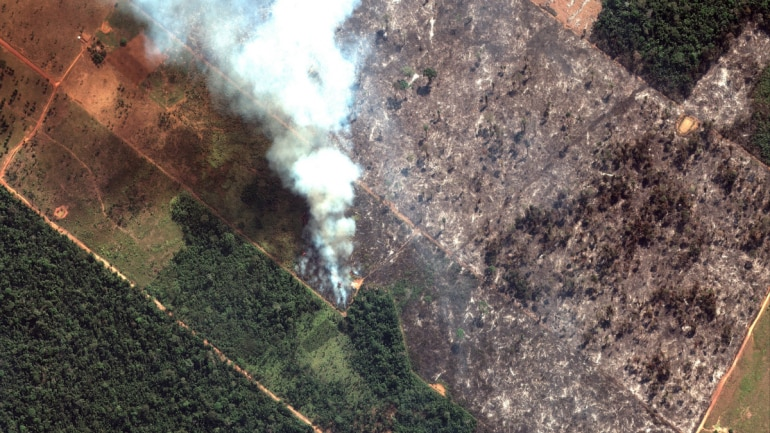 Amazon rainforest fire: Lungs of our planet burning with 99