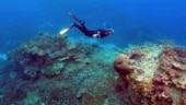 Australia's Great Barrier Reef in very poor condition: Government agency