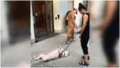 Hilarious video of dog lying on its back and refusing to walk is crazy viral. Internet can relate