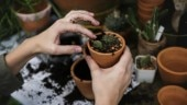 This institute instructs students to plant sapling as punishment for committing mistakes