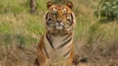 Bihar govt identifies Kaimur forests for tiger reserve