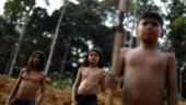 Amazon rainforest fire: Brazil's indigenous tribe commits to fight until last drop of blood