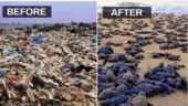 Fact Check: Are sea turtles making beeline for Mumbai beach after cleanup?