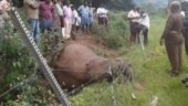 Elephant dies after getting trapped in fence in Tamil Nadu