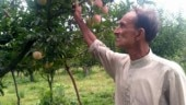 Kashmir clampdown: Apple crops rot as farmers struggle to sell produce