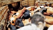 Row on culling of dogs in Telangana