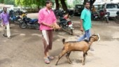 One night police custody for goat who strayed inside judge's bungalow