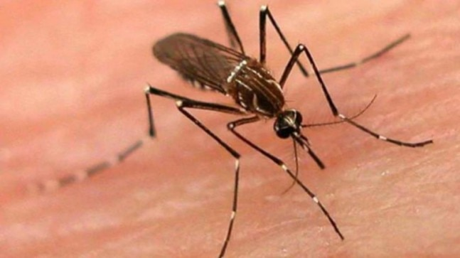 Lucknow reports 125 dengue cases in 2 months