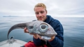 Man catches dinosaur fish in Norway. Viral pic will shock you