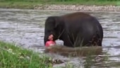 Baby elephant runs to save man from drowning. Viral video makes Internet tear up