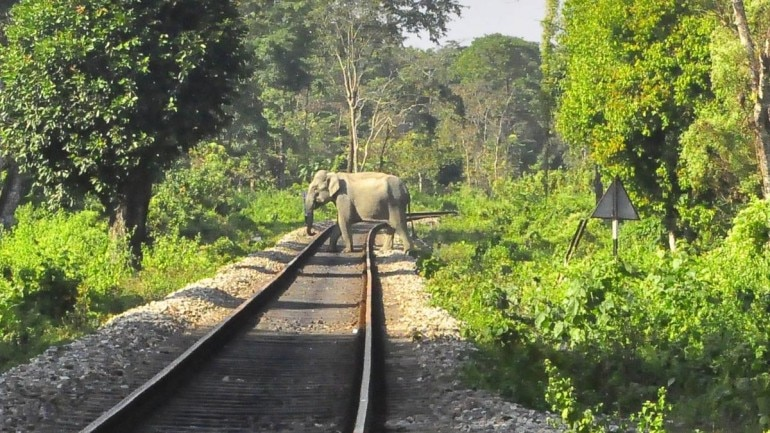 gajah tertabrak kereta