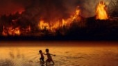Burning Amazon Rainforest: What we parents and children need to know