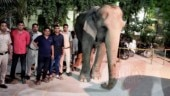 Elephant Laxmi, missing for 2 months after mahout fled with jumbo, found hidden in Delhi
