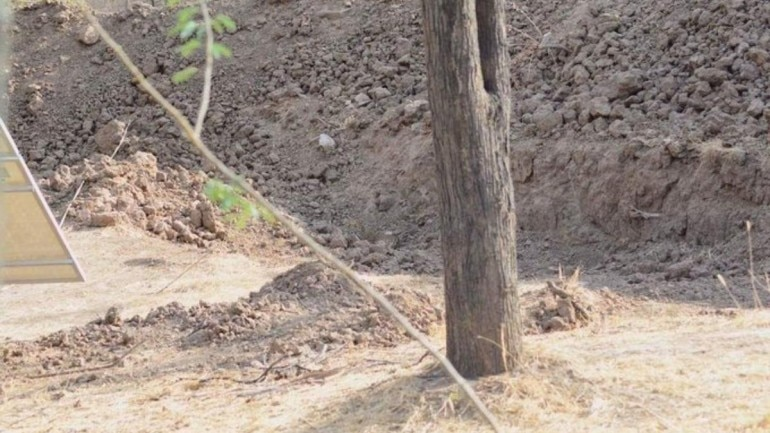 Can you spot the leopard in this viral pic Photo: Twitter/ Bella Lack