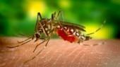 Dengue is a viral disease, transmitted by the infective bite of a particular mosquito known as Aedes Aegypti