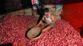 Delhi govt requests Centre to supply 5 truckloads of onion daily to tackle price rise