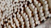 Cigarette stocks climb as govt approves ordinance to ban e-cigarettes