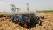 Satellite data shows 73% stubble burning cases were recorded in May