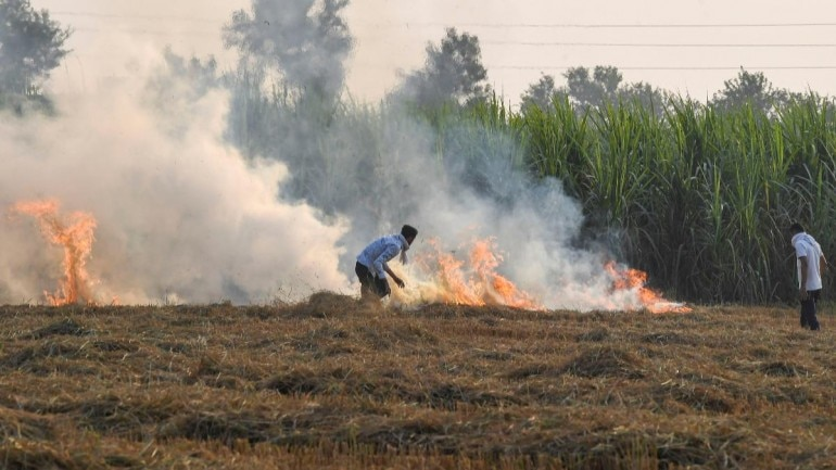 Image result for District Magistrate Should Take Strict Actions on Burning Stubble: CM Adityanath